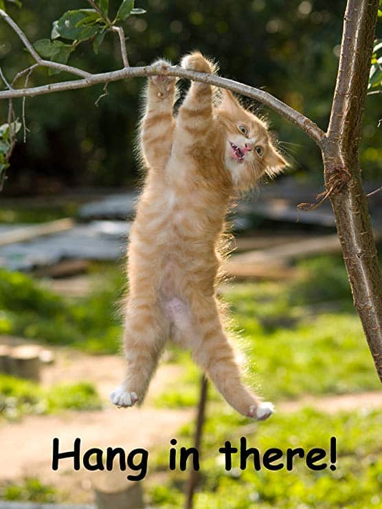 Hang in There Cat Poster