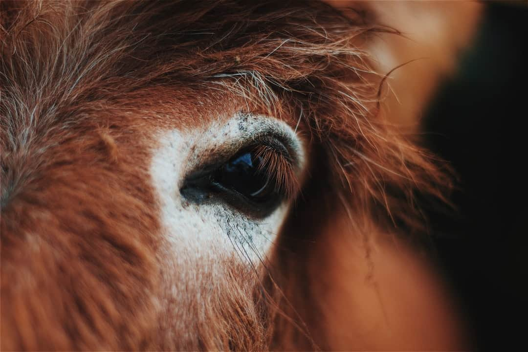 A close up of the face of a horse